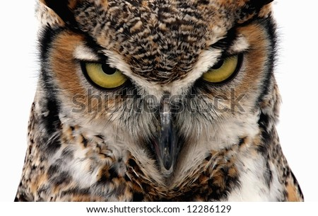 Eagle Owl staring at the camera in a threatening manner. Isolated on white