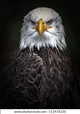 stock photo eagle portrait 112476230 - Каталог — Фотообои «Животные»