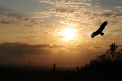 Eagle silhouette against a beautiful sunrise at El Valle de Anton, Panama.