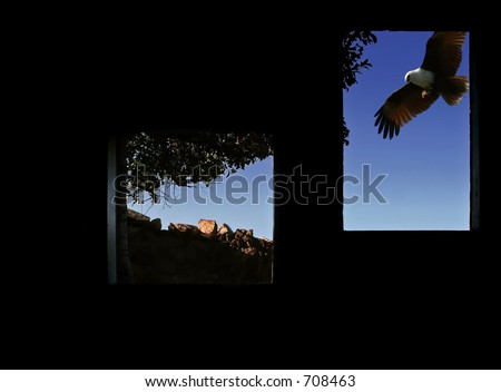 eagle soaring past window