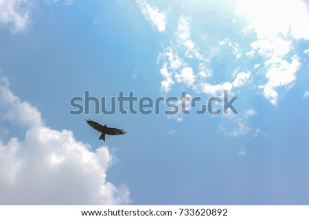eagle soars in the clouds, against the blue sky #733620892