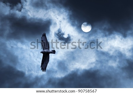 Eagle soars in the sky. The bird of prey soaring in the stormy sky