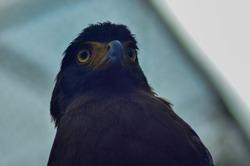 Eagle stand bold