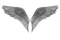 Eagle wing metal plumage isolated on white background with clipping path