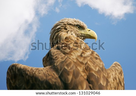 eagle with outspread wings against the blue sky