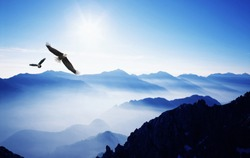Eagles flying over the mountains
