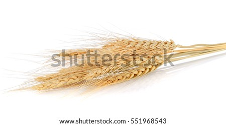 Ear of barley on white background #551968543