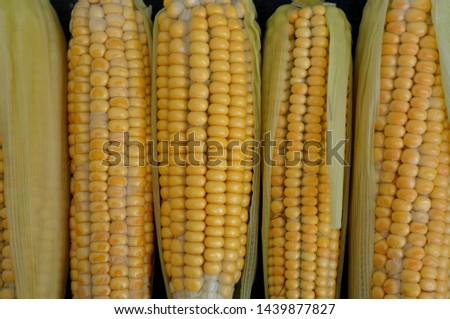 Ear of Corn - Corn Cobs - Food - Corn  #1439877827