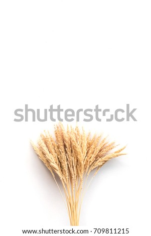 Ear of rice on a white background, free space for text #709811215