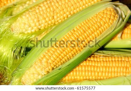 Ear of ripe corn in green leaves - stock photo