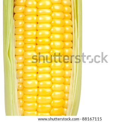 ear of ripe corn is isolated on white background