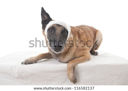 Ear or head bandage
