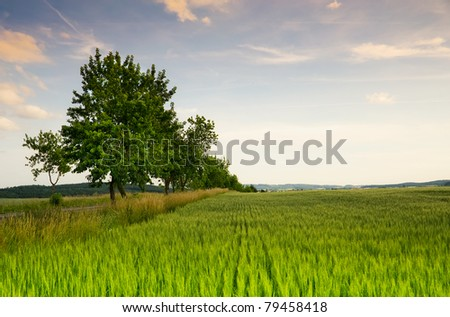 Early evening countryside scene