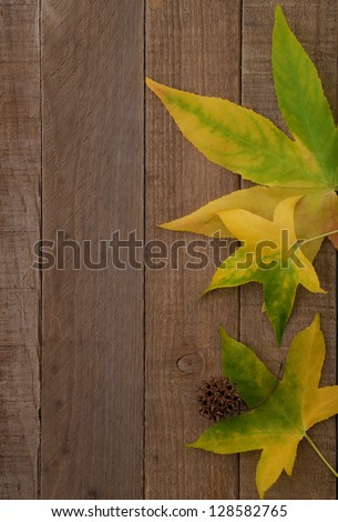Early Fall Leaves on Rustic Wooden Background with Copy Space.  Can be used either vertical or horizontal.