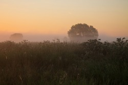 Early foggy morning-summer meadow grass and a tree in a haze focus on the background of the dawn sky and a space to copy. Concept-the beauty of nature