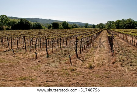 Early growth in vineyard of Sonoma County, California