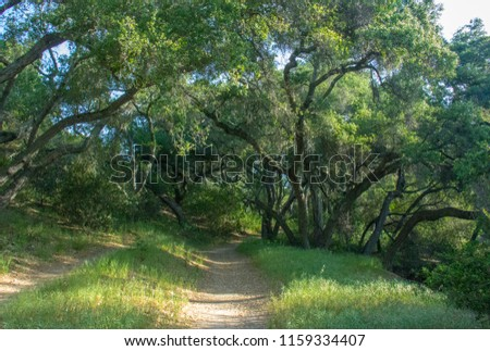 Early Morning Along a Tree Covered Hiking Trail in O'Neill Regional Park, CA Zdjęcia stock ©