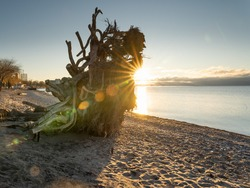 Early morning at Frenchmen's Bay in Pickering Ontario, the sun shining brightly on the beach silhouetting the remnants of uprooted trees