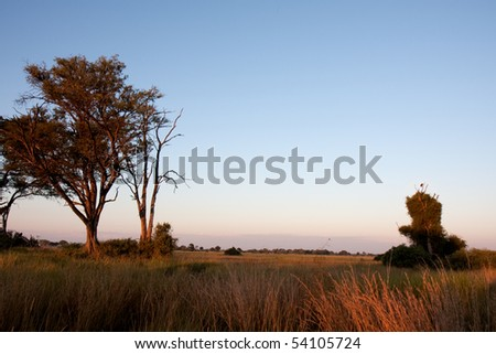 Early morning at sunrise in the Okavango Delta, Botswana.  The tree on the right has a hooded vulture sitting on the top.