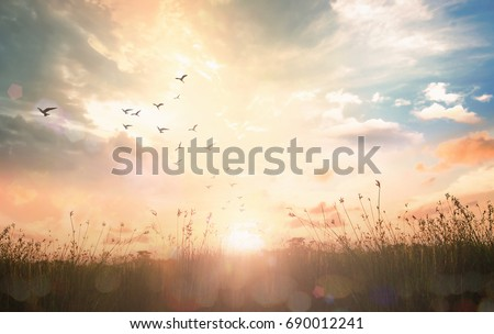 Early morning concept: Birds flying on meadow autumn sunrise landscape background #690012241