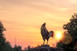Early morning concept: Silhouette rooster on blurred beautiful sunrise sky with sun light in farm autumn background