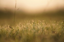 Early Morning Dew Drops on Grass - Abstract Blurred Background