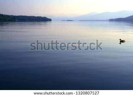Early Morning, duck swimming by, Lake George in the Adirondack Mountains of New York, USA
