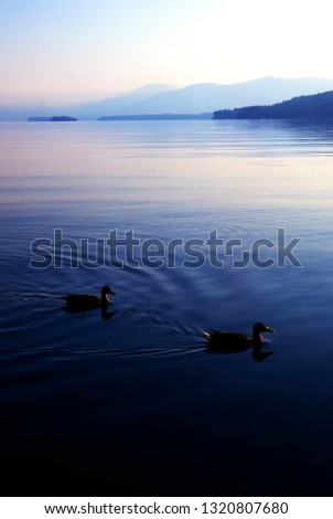 Early Morning, ducks swimming by, Lake George in the Adirondack Mountains of New York, USA
