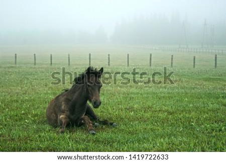 Early morning. Foal. Morning awakening. #1419722633