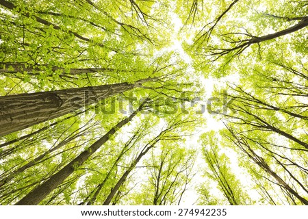 Early morning in the green forest at autumn  Stock photo ©
