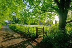 Early morning light and shadow in a Cotswold country lane in Summer near Painswick, The Cotswolds, Gloucestershire, England, UK