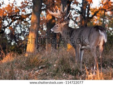 A Look At Details In Benefits Of Deer Antler