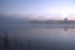 Early Morning On Bronson Lake
