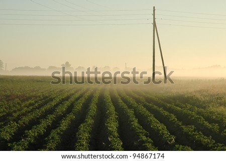 early morning on potato field