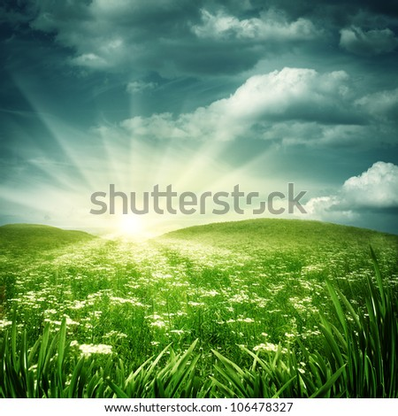Early morning on the daisy meadow, natural backgrounds