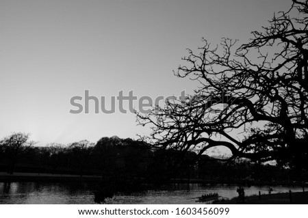 Early morning on the Yarra river Melbourne with rowers and tree in black and white Zdjęcia stock ©