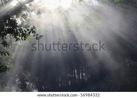 early morning rays make their way through dense vegetation