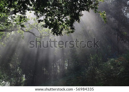 early morning rays make their way through dense vegetation