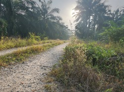 early morning scenery around the rural pathway.