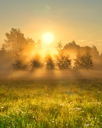 Early morning scenery in field. Sun casting beautiful rays of light through the mist and trees. Vibrant rays of sunlight in hazy meadow. Chamomile field in sunshine. Yellow sunrise with fog in summer.