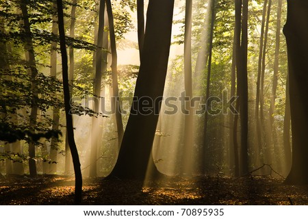 early morning sun in the woods withs sunbeams between the trees