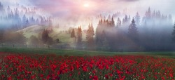 Early morning sun rays illuminate the dawn beautiful Carpathian landscape in the mist on the background of ancient trees are blooming field of summer flowers and poppies are red fire