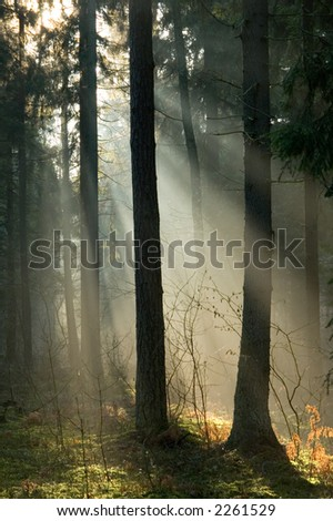 Early morning sunrise and forest