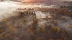 early morning sunrise foggy forrest, treetips standing out of fog autumn fall foggy fall sunrise drone shot