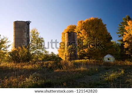 Early morning sunshine colors golden maple trees at an abandoned farm site in Kalamazoo Co., Michigan.