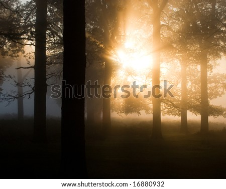 Early morning trees in the mist