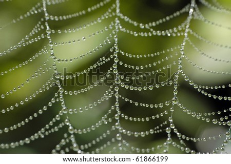 early morning wet spider web