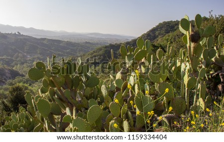 Early Morning With Sun Shinning on Some Cactus in O'Neill Regional Park, CA Zdjęcia stock ©