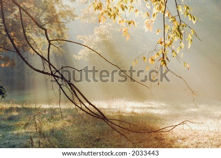 Early on a fall morning in rural Tennessee.  Catching the morning sun rays through the trees. - stock photo