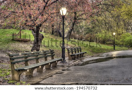 Early spring in Central Park, New York City with cherry trees after rain storm